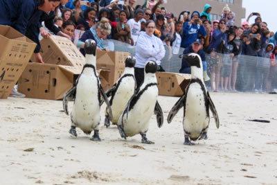 PACKAGING AND PLASTICS INDUSTRIES RAISE R45 000 FOR NEW SEABIRD HOSPITAL